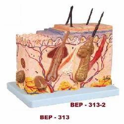 Skin Block Model ( BEP-313-2 )