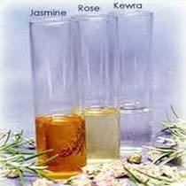 Natural Absolutes Oil
