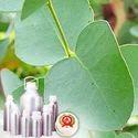 Eucalyptus Globulus Oil - Certified Organic