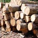 Imported Timber Logs