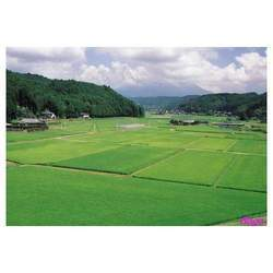 Agricultural Lands Dealing Services