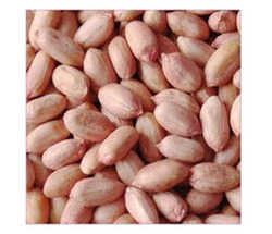 Peanut-Bold