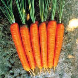 Carrots-Red Long