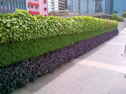 Vertical Gardens Manufacturers Suppliers Wholesalers