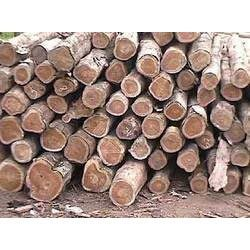 Hardwood Log Manufacturers Suppliers Amp Wholesalers