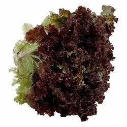 Lettuce Endive