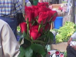 Valentines Day Fresh Cut Roses