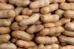 Groundnut(Peanut)