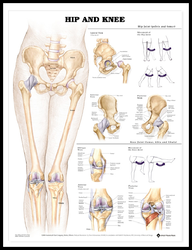 Hip and Knee Charts