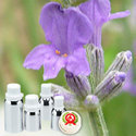 Lavender Absolute Extra Oil
