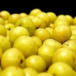 Fruit Juice Powder Juice Powder Suppliers Traders