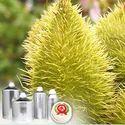 Annatto Extract 0.5 Percent Bixin Food Color