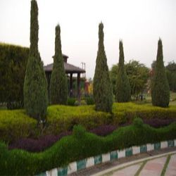 Soft Landscaping Solutions, Coverage Area: 1000 to 3000 Square Feet