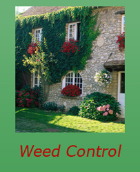 Glycel (Weed Control Chemical)