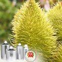 Annatto Extract 0.5% Bixin Food Color