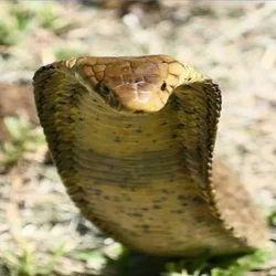 Snake Repellent Service