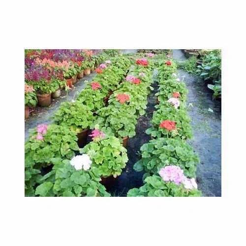 Flowering Plants Decorative Flowering Plants Manufacturer From