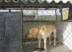 Pet Boarding & Hostel Service