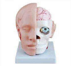 Head With Brain BEP-318B