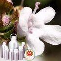Thyme Ct Linalool Oil - Certified Organic