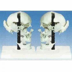 Skull Boes ( BEP-104-1 )