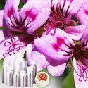 Geranium Oil (Egypt) - Certified Organic