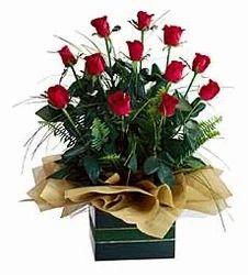 Wood Roses