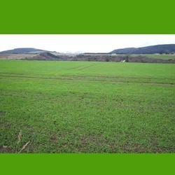 Agriculture Land Sale & Purchase Services