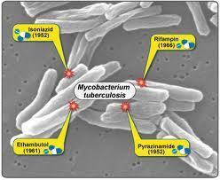 Treatment For Tuberculosis(TB)