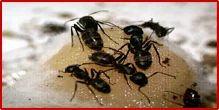 Euro Ants Management Services