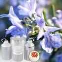Rosemary Hydrosol Oil