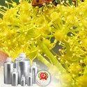 Galbanum Essential Oils