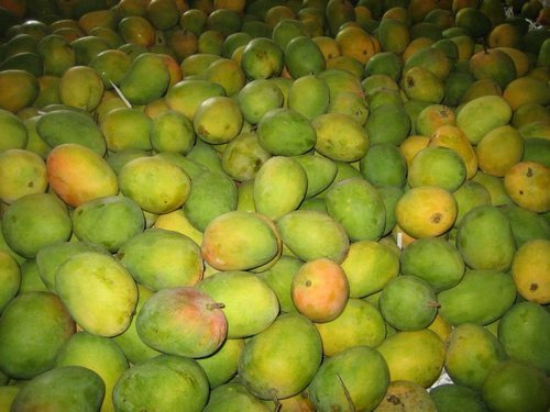 Alphonso Mango - View Specifications & Details of Alphonso