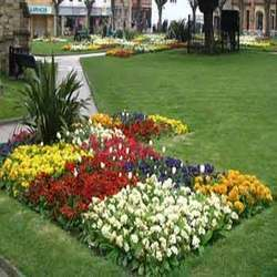 Horticulture Consultancy Service