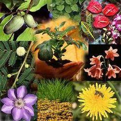 Horticulture Consultants