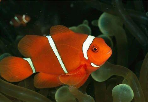 Utkarsha Aquarium Mumbai Wholesaler Of Marine Fish And Endemic Fish