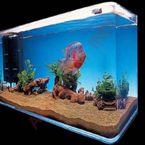Pics For > Flowerhorn Fish Tank