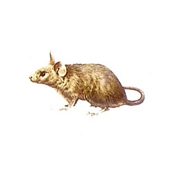Pied Piper Services (Rodent Control Services)