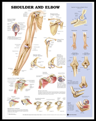 Shoulder and Elbow Medical Charts