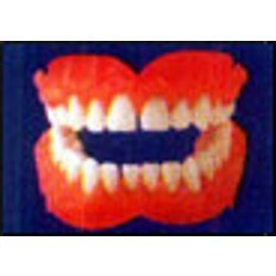 Injection Molded Denture