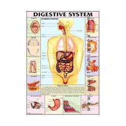 HP05S-Digestive System