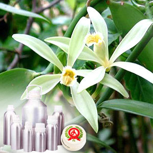 Vanilla Eseential Oil - 100% Pure Buy Online Natural Vanilla