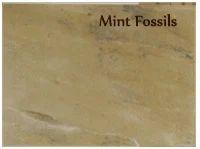 Mint Fossils Sandstone