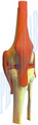 Natural Fiberglass Human Knee Joint, Packaging Type: Box