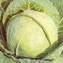 Cabbage (Patta Gobi)