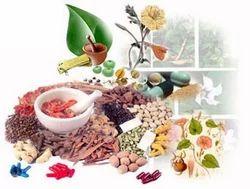 Medicinal Plantation Consultancy