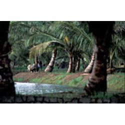 Kerala Backwater Tours Packages
