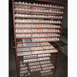 Country Chicken Hatching Eggs, For Household, Packaging Type: Box