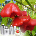 Paprika Oleoresin 100000 CU Food Colours