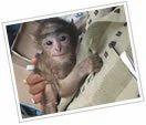 Nanu The Orphaned Monkey